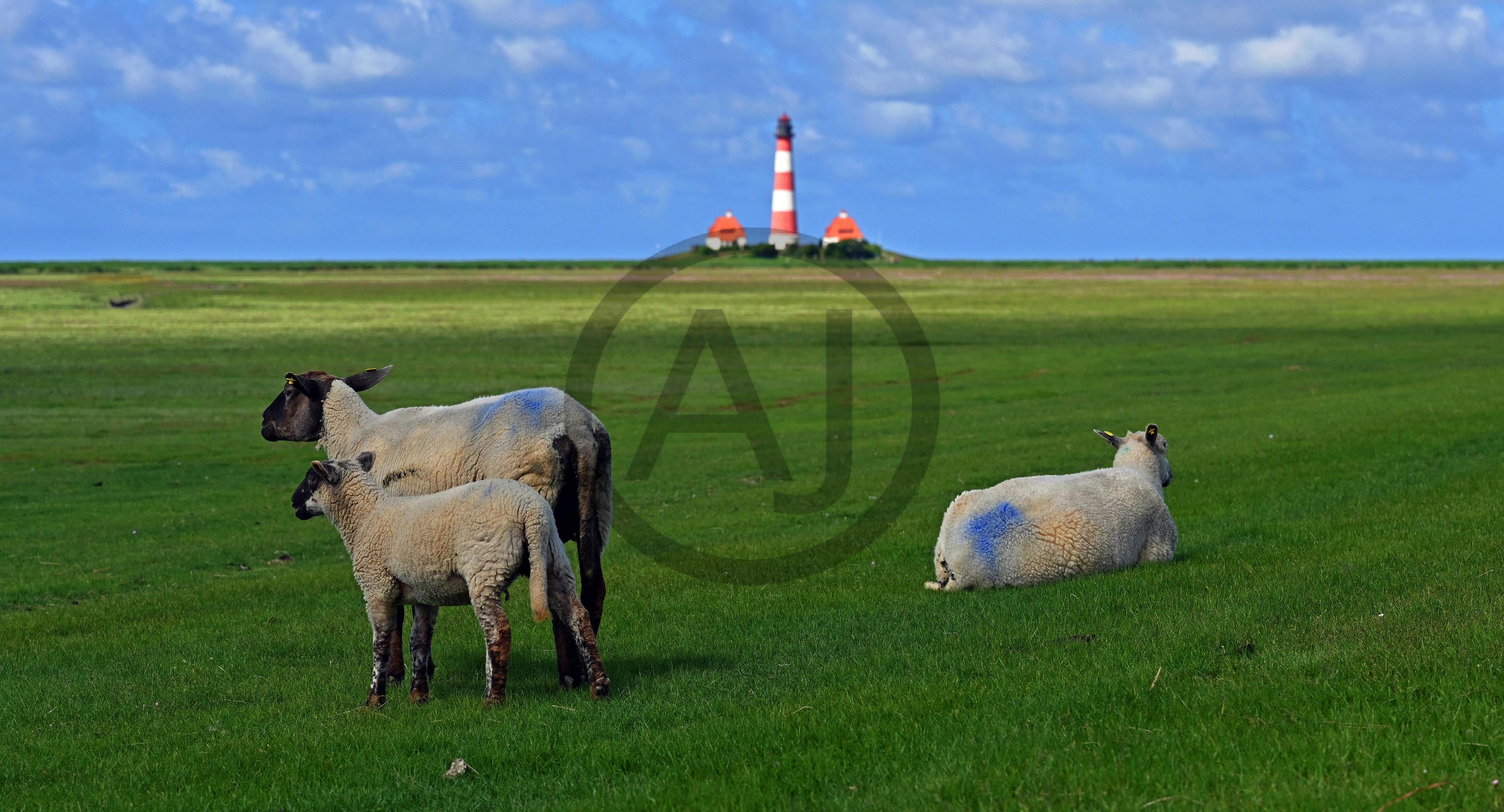 <i>Lighthouse Westerheversand, Nordfriesland (Germany)<i>